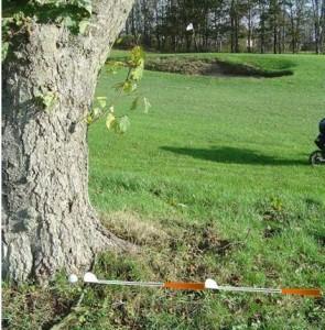 bold ved træ 16