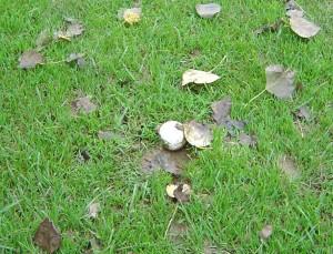 blad på beskidt bold
